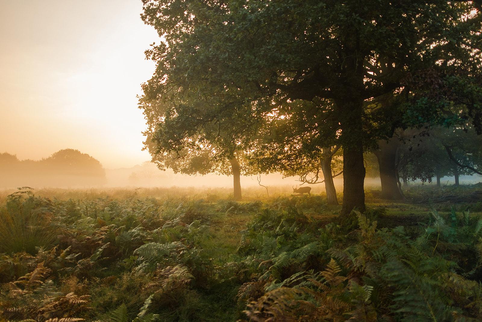 Woodland spirits by Simon Wilkes