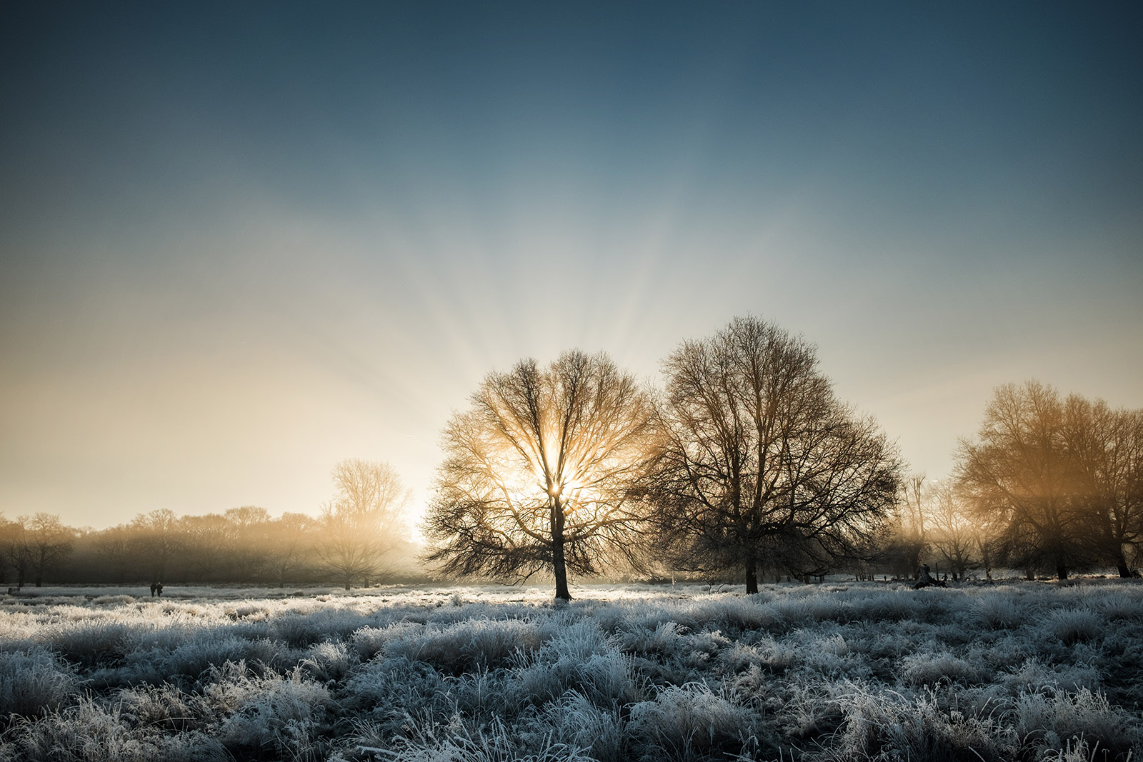 simon-wilkes-winter-light-02