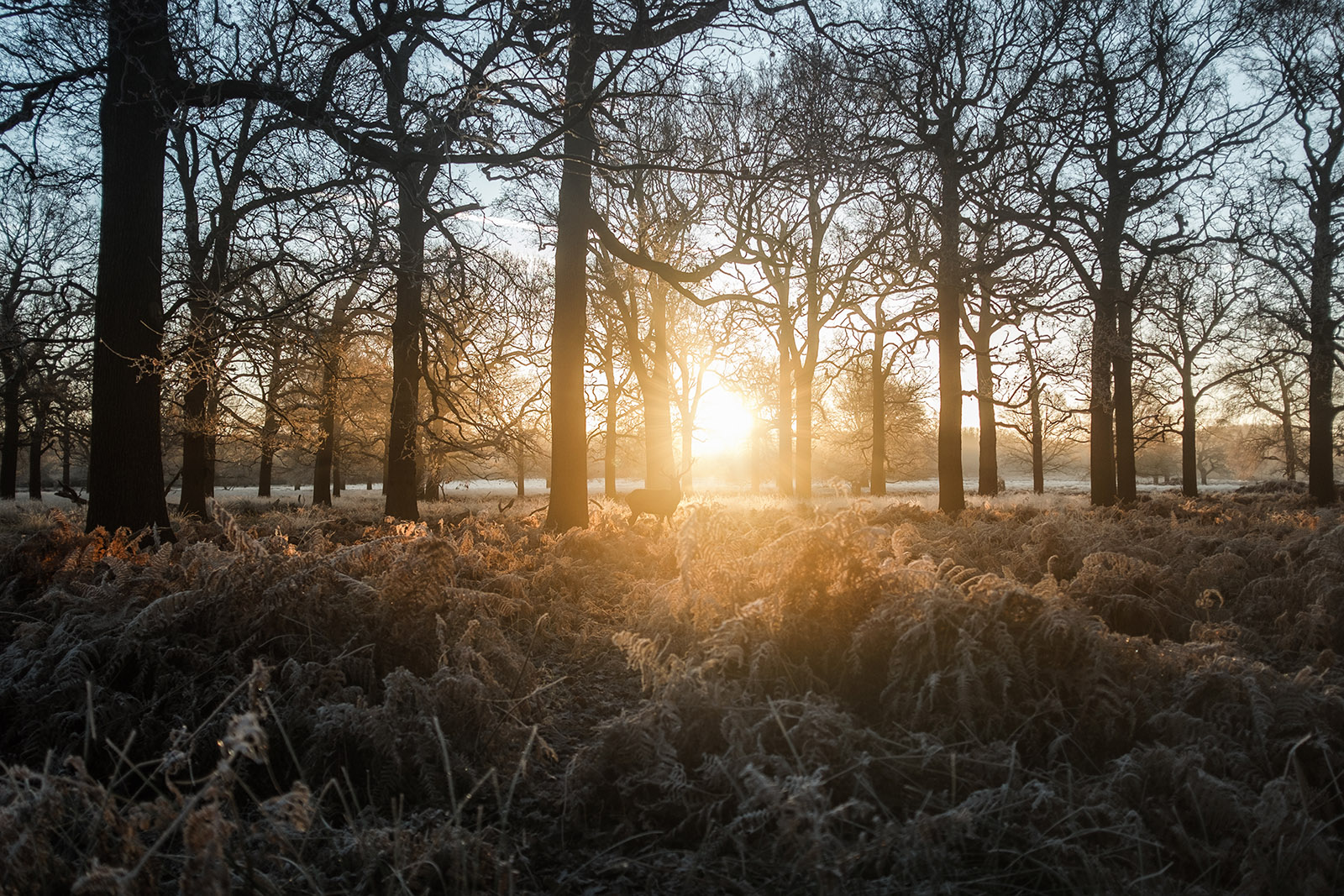 simon-wilkes-winter-light-04