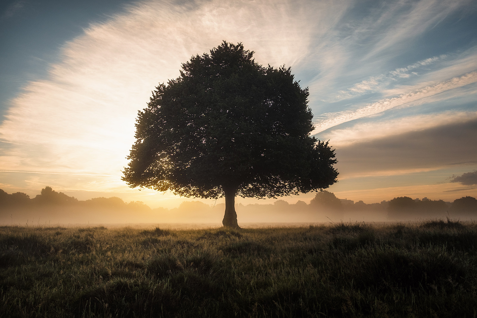 Dawn in Richmond Park. Photograph by Simon Wilkes, 2017