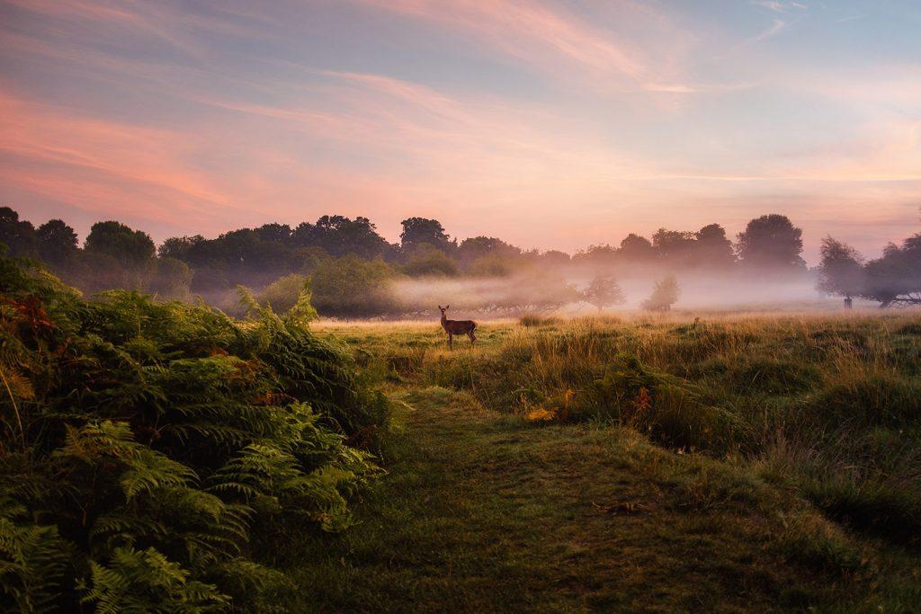Wild Dawn