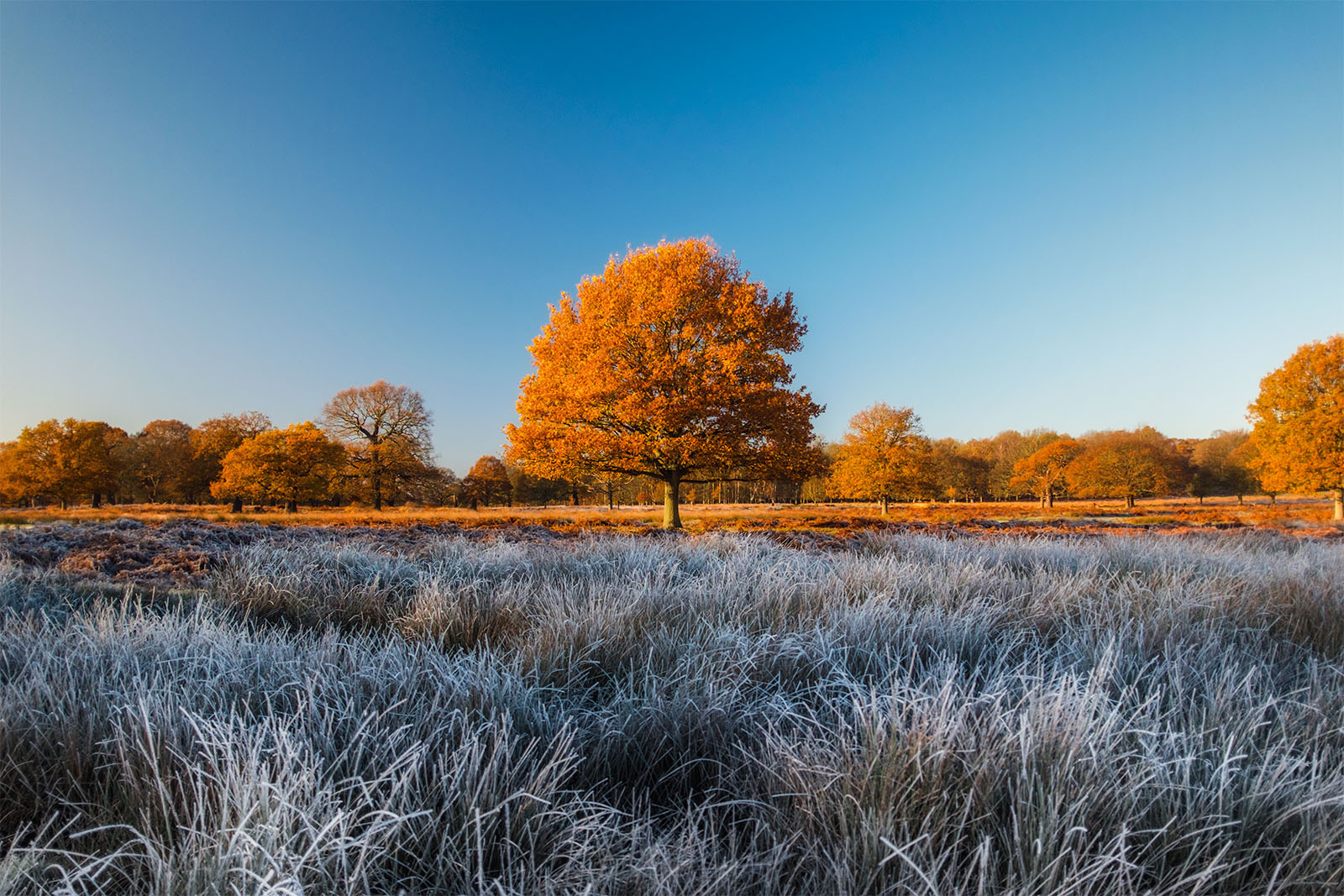 Winter in Richmond Park by Simon Wilkes