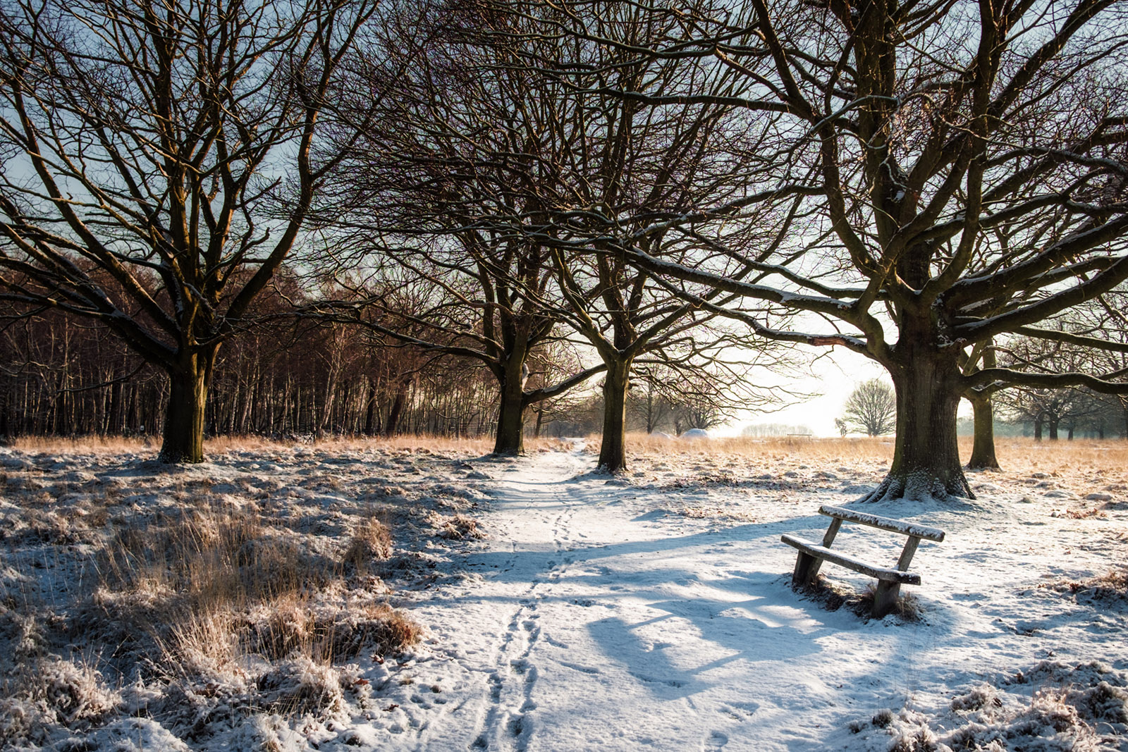 Snow days by Simon Wilkes