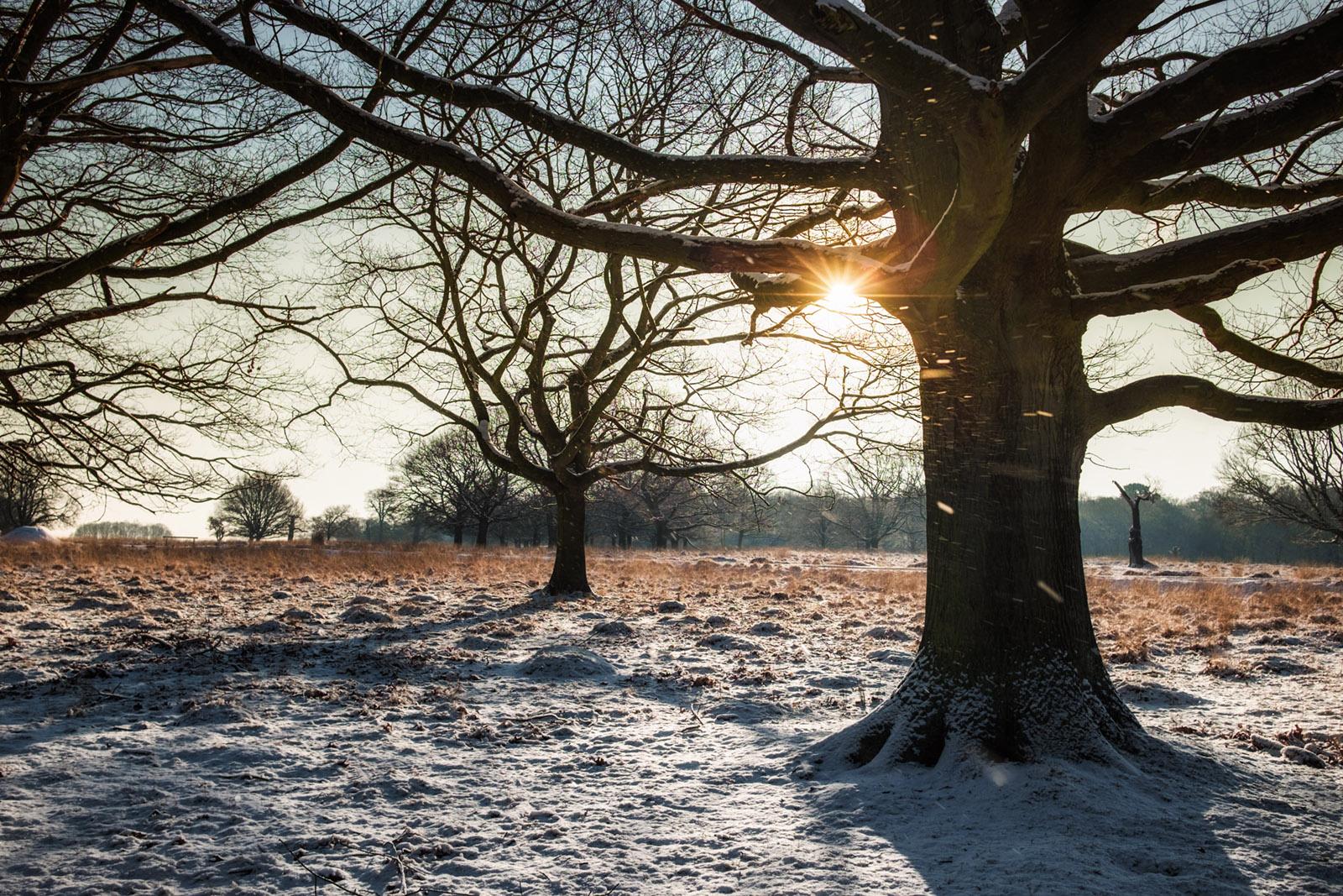 Snow in Richmond Park